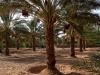 biomarkt-algerien2